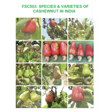 Indian species and varieties of cashewnut (2008)